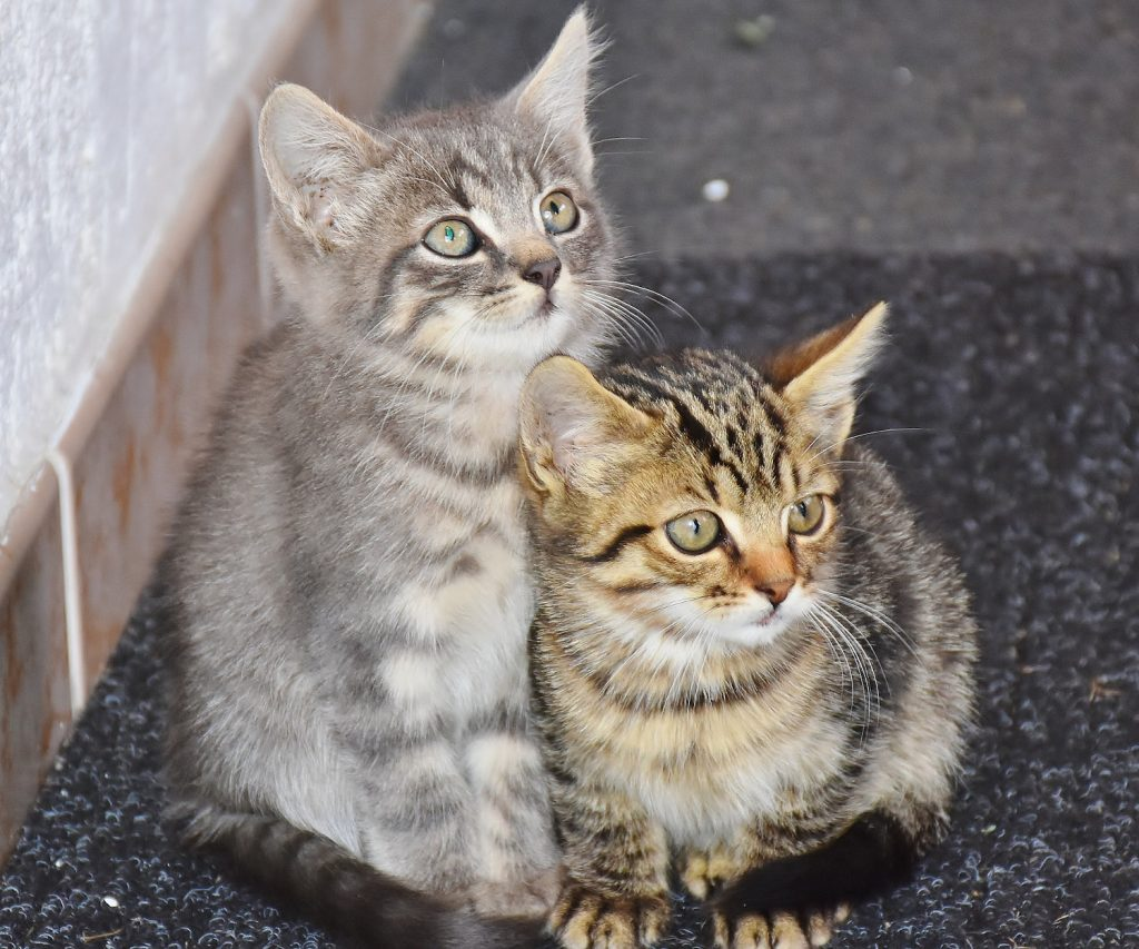 duo namen katten