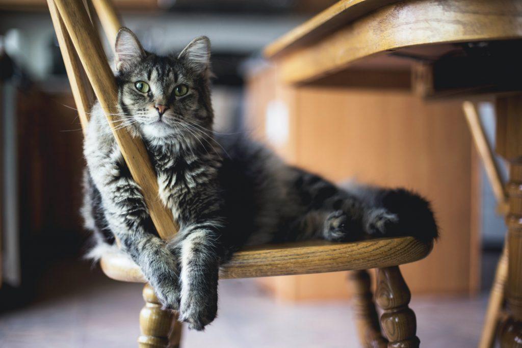 grappige kattennamen kater