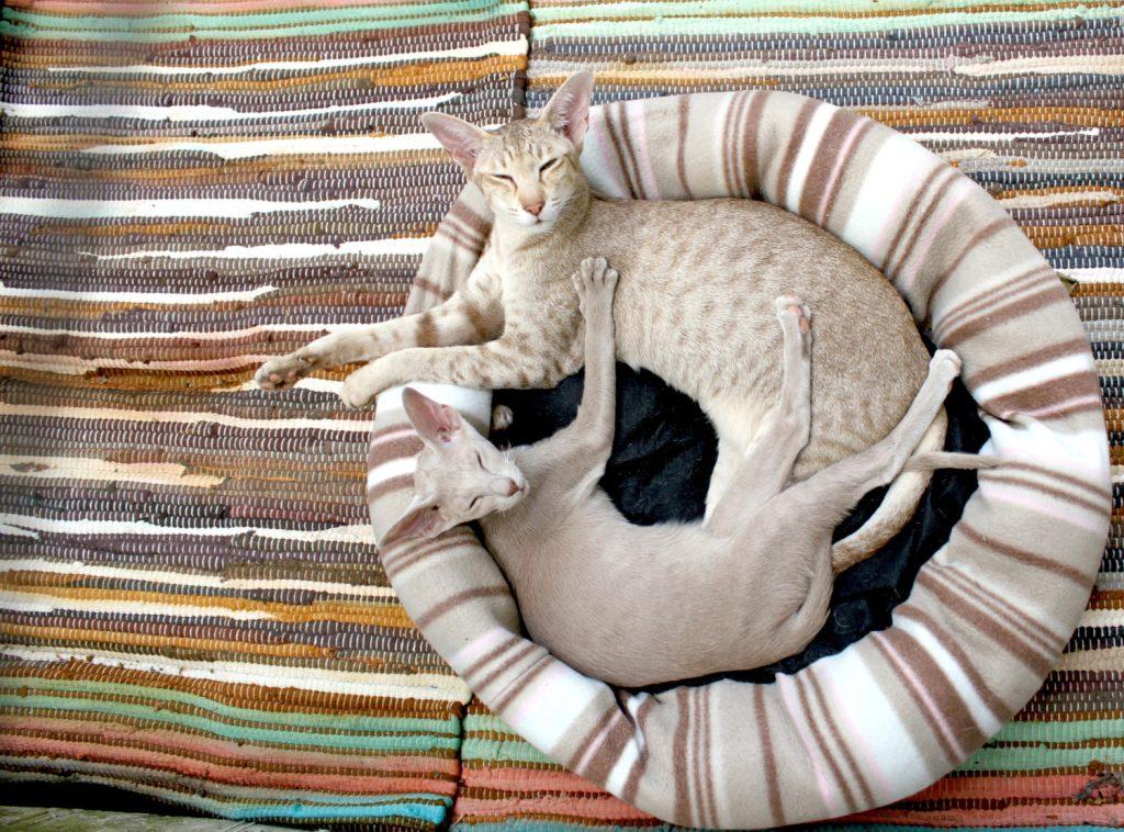 katten benodigdheden de kattenmand