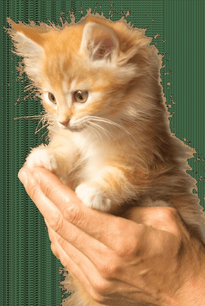 katten en voeding