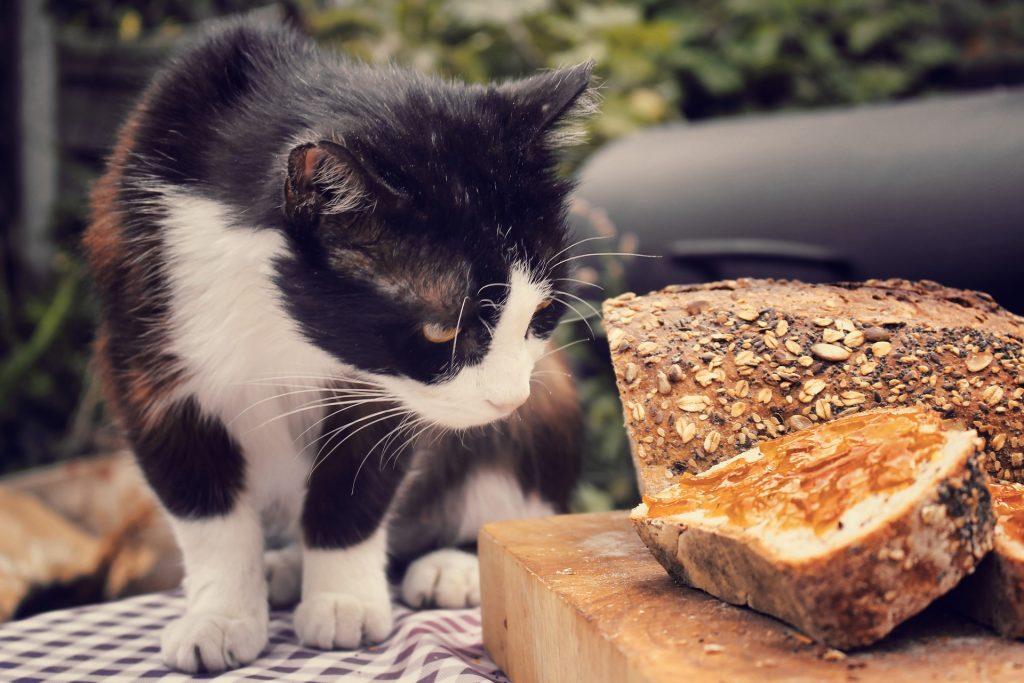 mag een kat brood eten